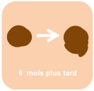 Vilain_Petit_Canard_évolution
